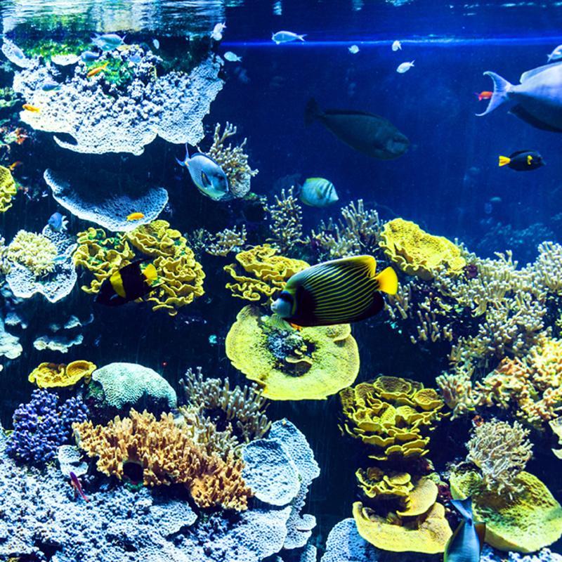 Musee Oceanographique Monte Carlo Monaco