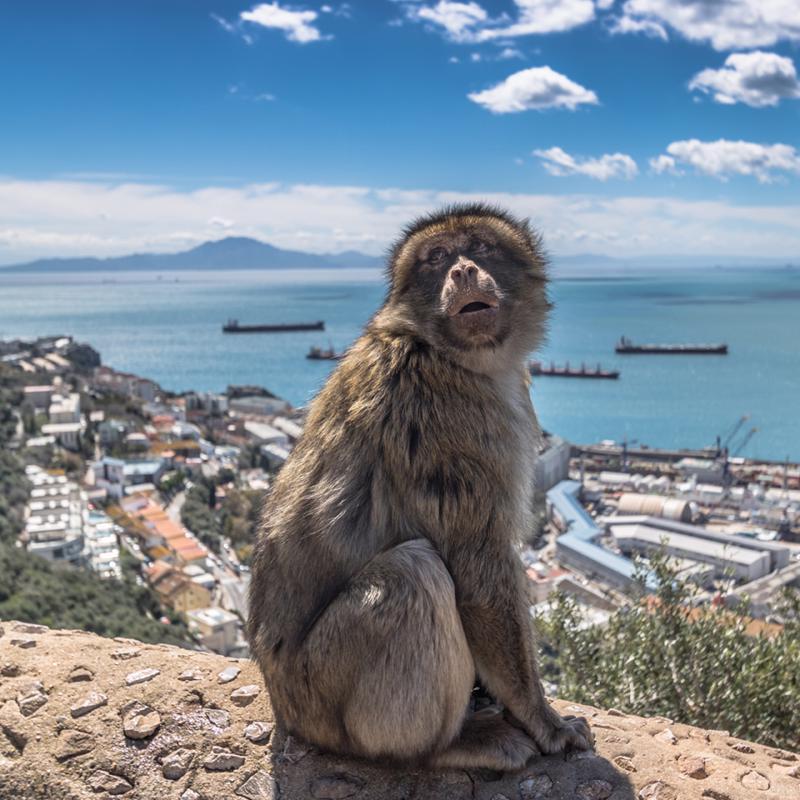 Upper Rock Nature Reserve Gibraltar