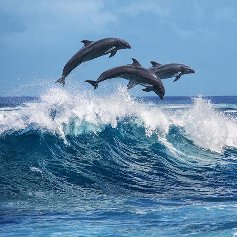 Ocean World Dolphin Amber Cove Dominican Republic