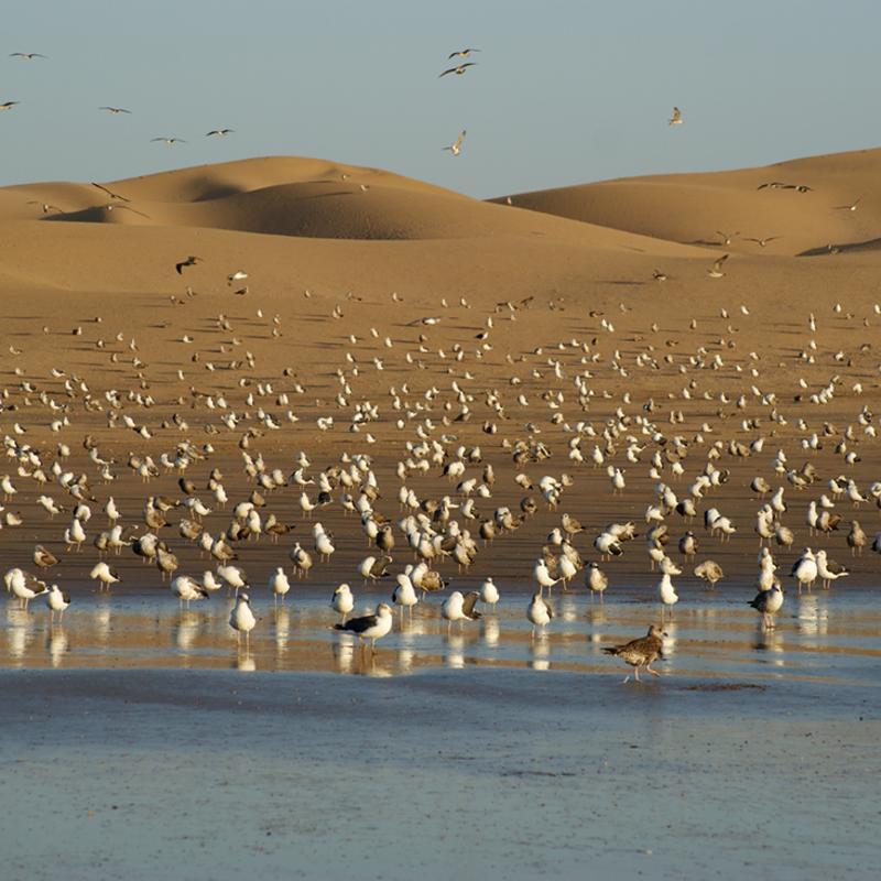 Agadir Bird Valley Morocco
