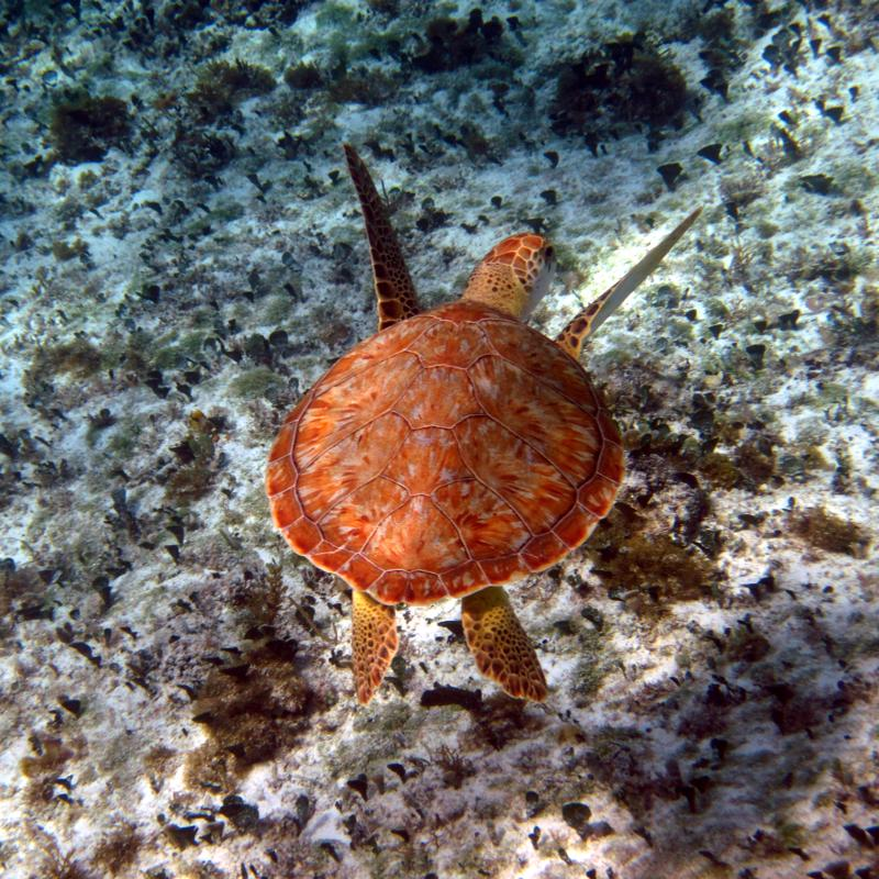 Punta Sur Ecological Park Cozumel Mexico