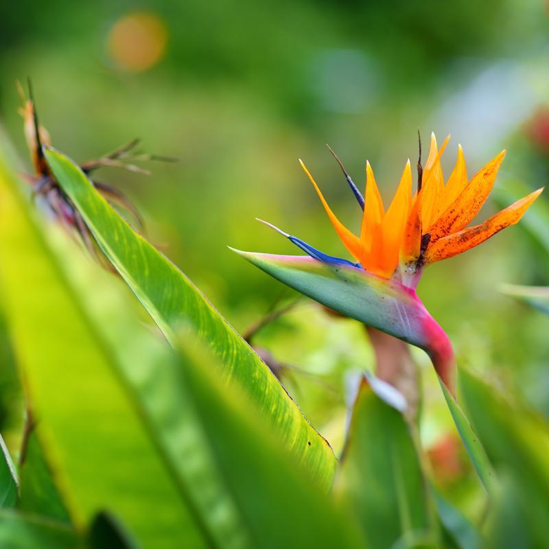 Maui Nui Botanical Gardens Kahului Hawaii