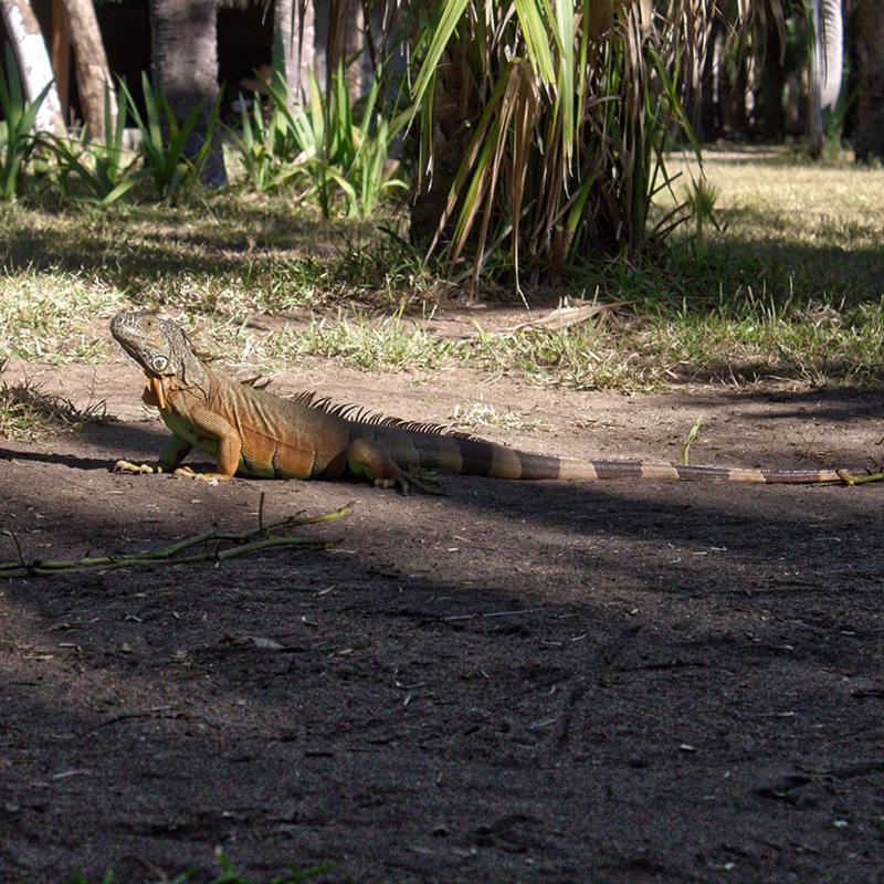 Parque Eco-Arqueologico copalita Huatulco Mexico