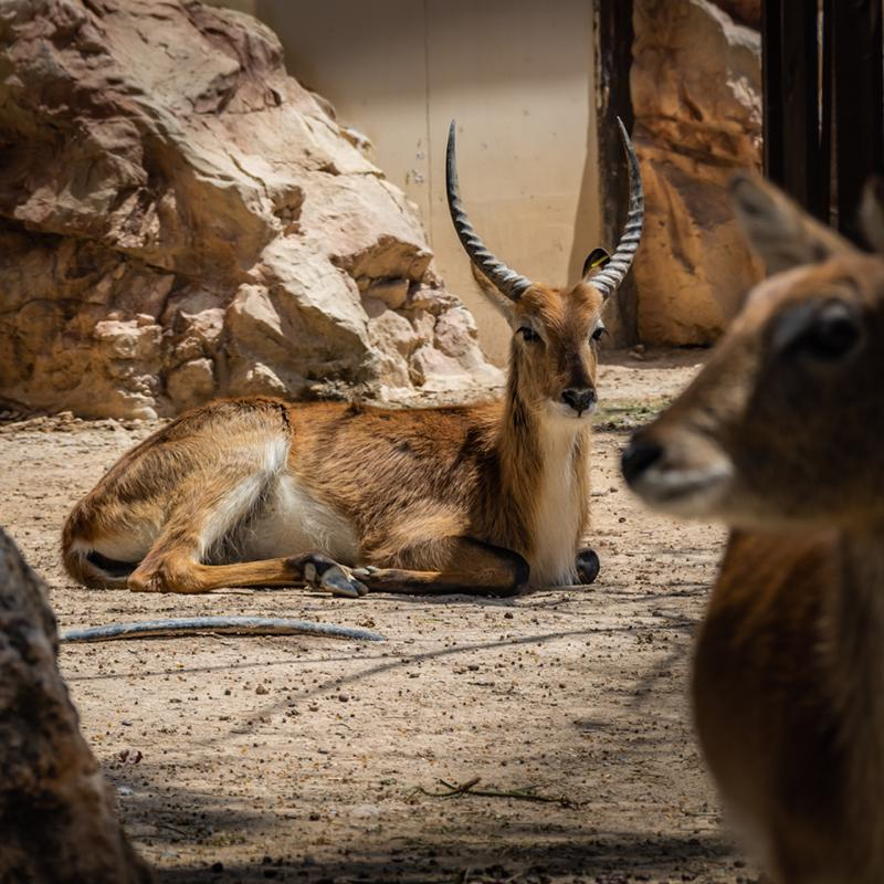 Limassol Zoo South Cyprus