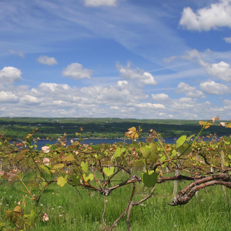 Finger Lakes New York USA
