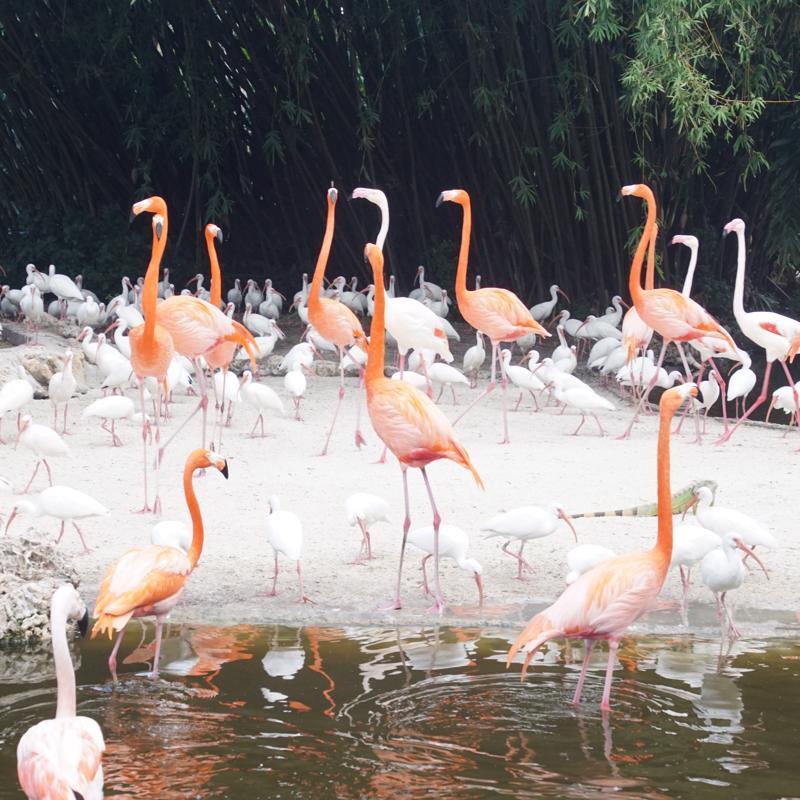 Flamingo Gardens Wildlife Sanctuary Fort Lauderdale USA
