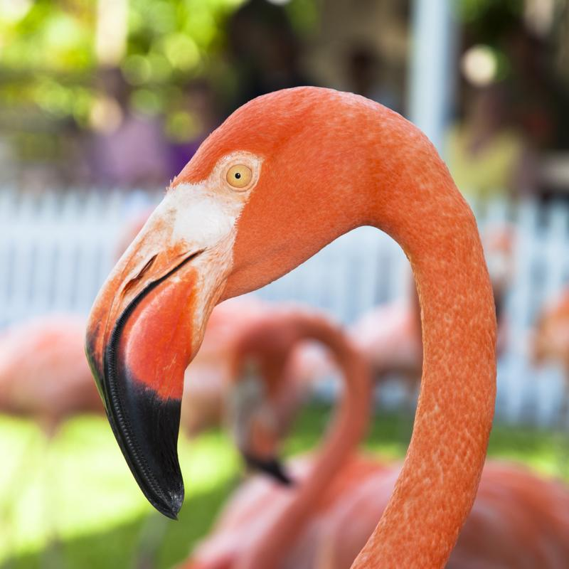 Ardastra Gardens, Zoo and Conservation Centre Nassau bahamas